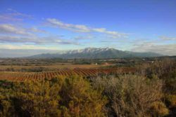 Photo: Vineyards with mountains