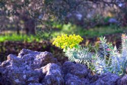 Photo: Vegetation at Mount Etna