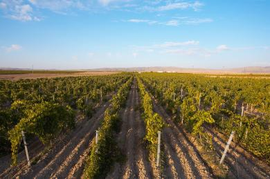 Cappadochian Vineyards