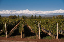 Vineyard in the Andes © Wines of Argentina