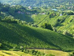 Vines organised in structure of amphitheater in Plesivica of central Croatia . Source: Thomas Brandl