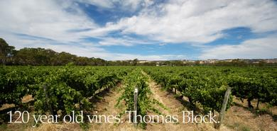 Our flagship 125 year old Shiraz vineyard, Thomas Block