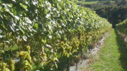 Photo: Camel Valley