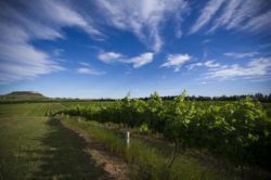 Photo: Campanha: the current Eldorado of winegrowing
