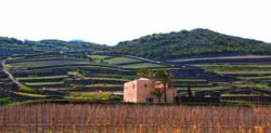 Photo: Donnafugata on the island of Pantelleria