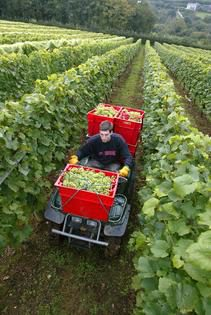 Photo: Harvest with a quad