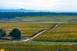 Photo:  Vineyards in Thrakien