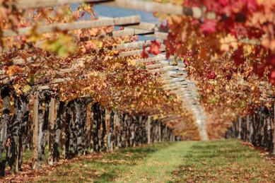Autumn Carmenere