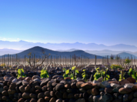 Photo: Cool Climate vineyards in Valle Limarí.