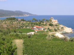 Photo: Vineyard Mylopotamos
