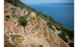 Vineyard on the island of Brac. Source: Thomas Brandl