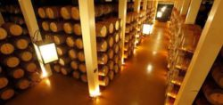 Photo: Wine cellar Beronia