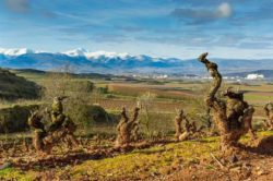 Photo: Landscape Rioja