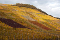 Photo: Slopes with different grape varieties