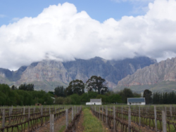Photo: Paarl Vineyard