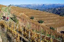Photo: Organic vineyard at Priorat Source: Ecovin, Demeter, Gerd Kressel / Smart Wines and Andrea Scaramuzza