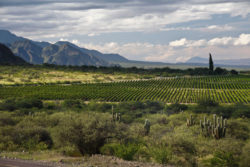 Landscape in Cafayate © Wines of Argentina